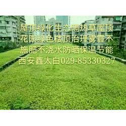 室外绿化厂园林小绿化屋顶绿化楼顶隔热图片