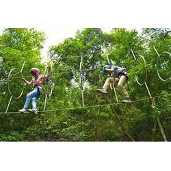 丛林探险设施报价 丛林飞跃生产厂家图片