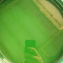 厂家生产耐高温树脂玻璃鳞片涂料哪家好图片