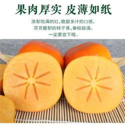 一年生阳丰柿子苗发货价-一年生阳丰柿子苗-润耀园艺(查看)图片