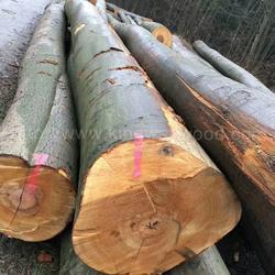 德国金威木业 进口德国榉木 原木 AB级 欧洲木材 锯切 板材 实木图片