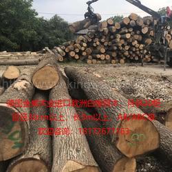 德国金威木业 进口欧洲木材 橡木 白橡 原木 可锯切月供20柜 板材 实木木料 可锯切 AB级ABC级图片