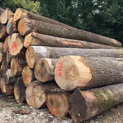 德国金威木业进口欧洲 白橡木ABC级 原木 橡木 实木 进口木材 欧洲材 锯切材 板材 木板图片
