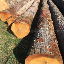 德国金威木业进口法国白橡木 原木 实木 欧洲橡木 ABC级 稳定月供 家具料 地板材 可锯切 板材图片