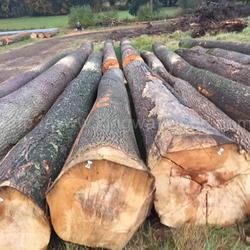 德国金威进口 欧洲木材 原木 白蜡木 实木 北欧 木材 原材料 ABC级图片