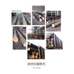 德国金威木业 进口实木 欧洲木材 原材料 白蜡木 原木 蜡木AB级ABC级 木材图片