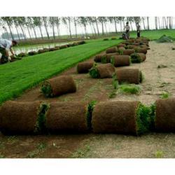 红星草业-河北绿化草坪-邢台小区草坪品牌图片
