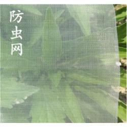 绿色有机蔬菜大棚防虫网全新料加密纱网图片