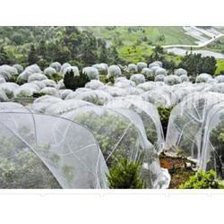 果树蔬菜防虫网推荐安平志广丝网厂优质纯新料加厚防虫网图片