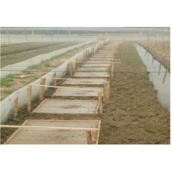 优质青蛙围网Aleshan青蛙养殖围网A厂家直销结实围网图片