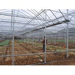 蔬菜温室-青州瀚洋农业-薄膜蔬菜温室图片