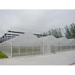 联动大棚-薄膜联动大棚-青州瀚洋农业(优质商家)图片