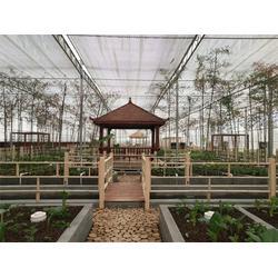 玻璃溫室設計-玻璃溫室-青州瀚洋農業圖片