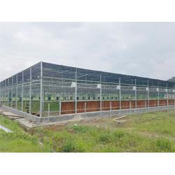 玻璃大棚-青州瀚洋农业-玻璃大棚餐厅图片