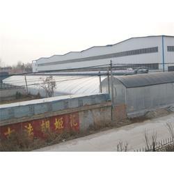 国外日光温室-日光温室-青州瀚洋农业图片
