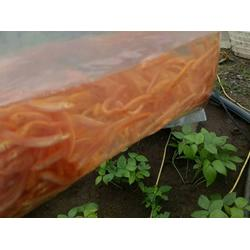 泥鳅养殖_ 武汉鑫渔圣生态科技_泥鳅养殖场有哪些图片