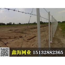 鑫海公司刺铁丝隔离栅,刺铁丝护栏网,专业生产定制,值得信赖图片