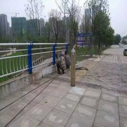 普洱桥梁钢护栏-龙哲护栏定做图片