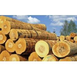 泰国马来西亚印尼木材进口许可证图片