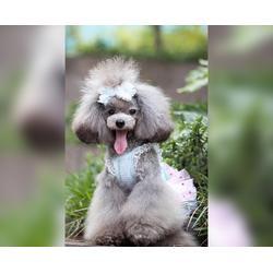 宿州宠物美容培训-安徽双银-宠物美容培训中心