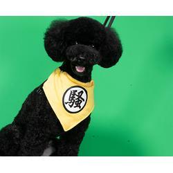 專業寵物美容館-安徽雙銀(在線咨詢)-合肥寵物美容