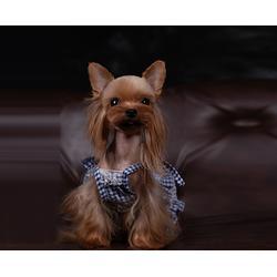 合肥宠物美容-宠物美容哪家专业-安徽双银(优质商家)图片