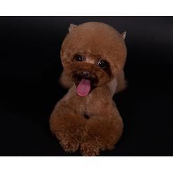 附近宠物美容培训-合肥宠物美容培训-安徽双银图片