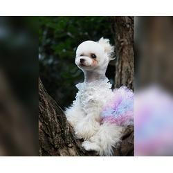 铜陵宠物美容培训-专业宠物美容培训-安徽双银图片