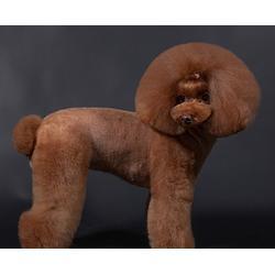 合肥宠物美容培训-安徽双银-宠物美容培训费用多少图片