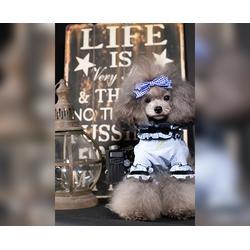 合肥宠物美容-宠物美容费用-安徽双银(推荐商家)图片