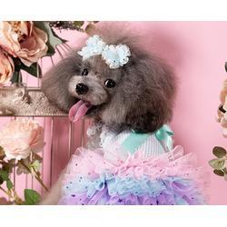 合肥宠物美容-安徽双银宠物美容咨询-宠物美容费用图片