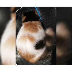 合肥猫咪洗护培训-安徽双银-CAAC猫咪洗护培训班