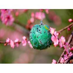 粘虫球-买西安502胶当然选西安益霸图片