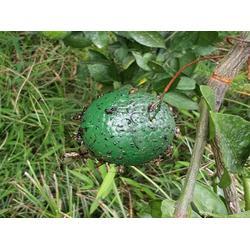 西安实蝇球-怎么挑选品牌好的西安502胶图片