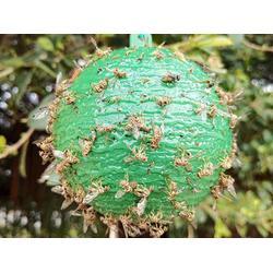 粘虫球-陕西哪里买实用的诱蝇球图片