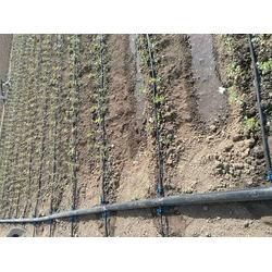 巴彥淖爾內鑲滴灌帶-銀川哪里有專業的內鑲滴灌帶-潤澤源節水灌溉科技圖片
