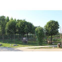 四季丰种植服务优-沙红桃采摘图片