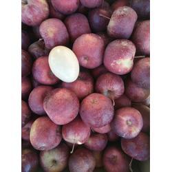 苗圃出售龙丰果树苗 龙丰苹果苗 机械起苗图片