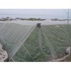 全新料无毒无害聚乙烯耐氧化果树大幅拼接柑橘果树用网图片