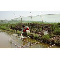 厂家直销沼泽淤泥耐氧化抗衰老青蛙养殖网图片