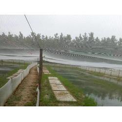 志广丝网全新料耐氧化聚乙烯青蛙养殖围网图片
