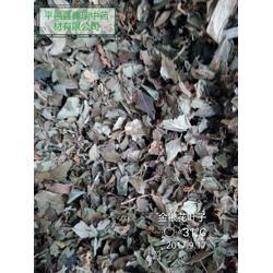 倾销金银花叶子金银花下脚料提取用叶子-平邑辉瑞中药材供应优良的金银花叶子图片