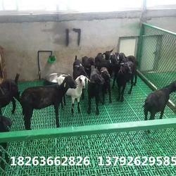 羊用的漏糞板 羊棚漏糞板羊床 養羊專用漏糞板圖片