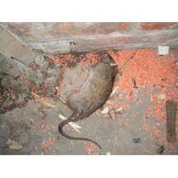 灭鼠哪?#20202;?口碑好的灭鼠服务优选宏都害虫防治图片
