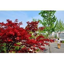 艺术学校-合格的青岛在山东 艺术学校图片