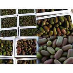软枣猕猴桃-丹东红色软枣猕猴桃苗上哪买图片