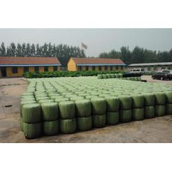 德瑞農牧機械有限公司質量好的面包草出售-專用面包草廠家圖片