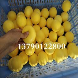 多规格尺寸现货PU发泡球 高弹海绵球 PU篮球图片
