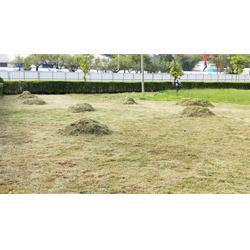 广场绿化设计-找信誉好的绿化养护管理就到肇庆活力园林图片