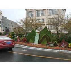 五色草招商-想找服務好的五色草就來徐州紅景天農業圖片